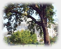 CapitolTree