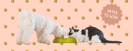 Lucy Postins on Keeping Your Pet Healthy image